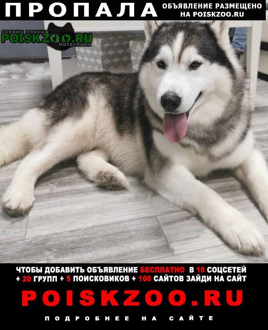 Пропала собака хаски Черноморское
