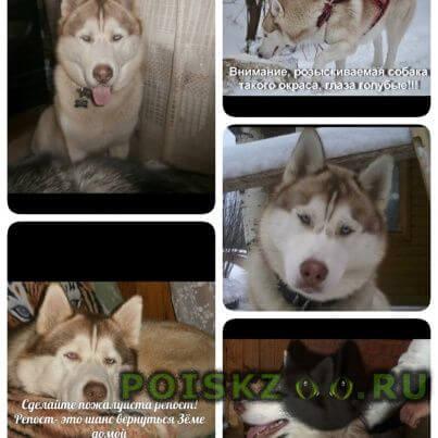 Пропала собака кобель г.Луга