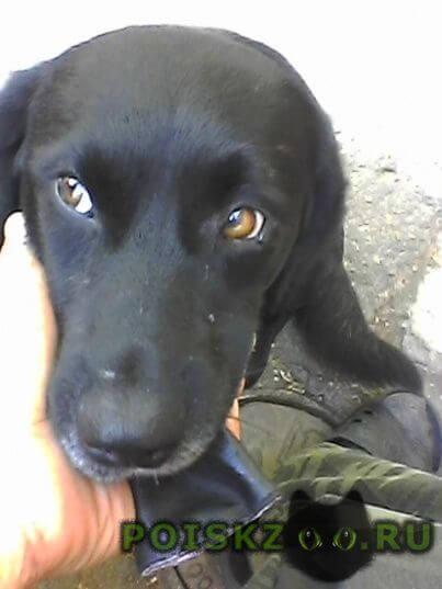 Пропала собака кобель увезена из лотошина 16 августа в одинцово? г.Лотошино
