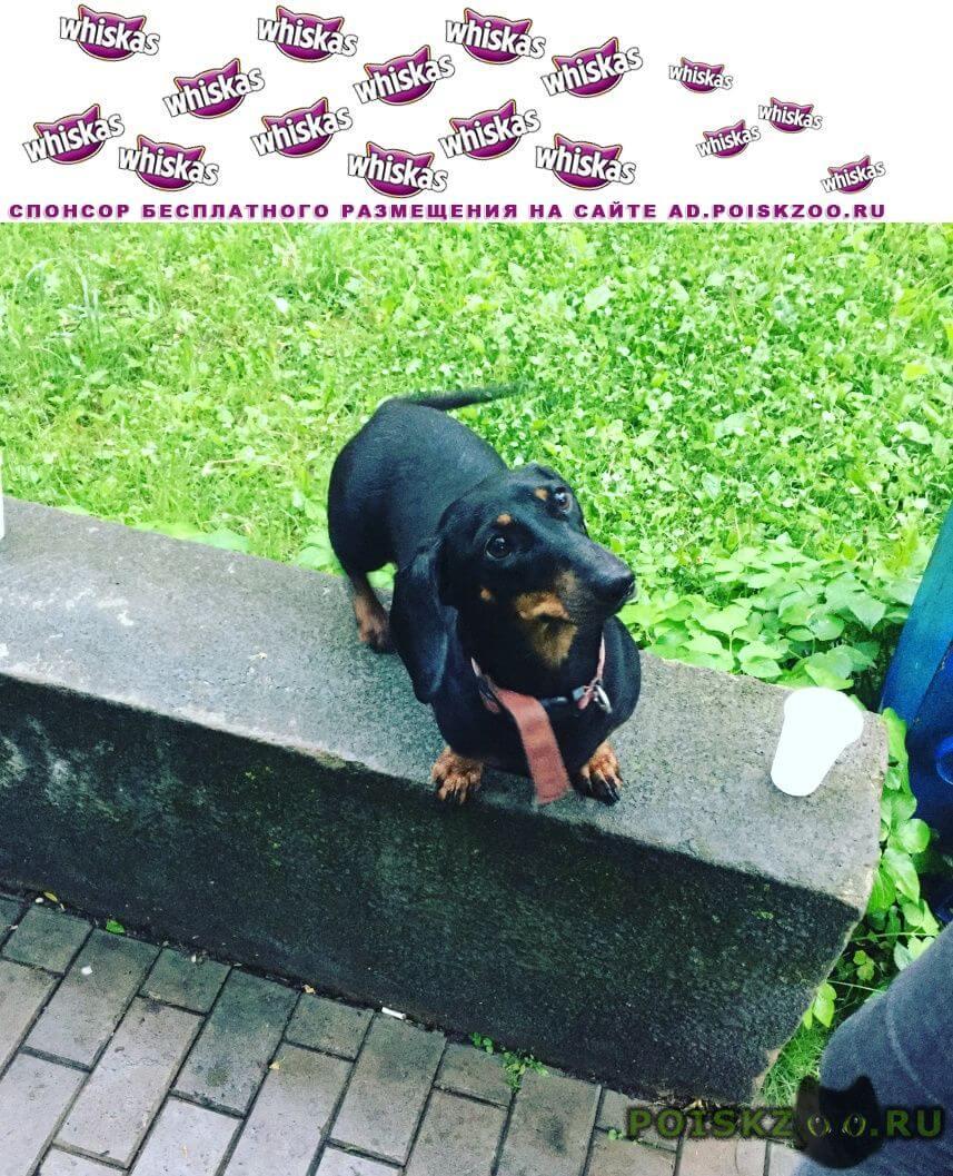Пропала собака екатерина г.Королев