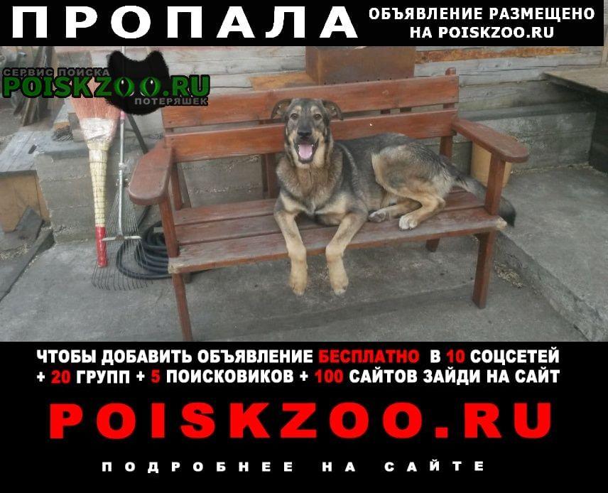 Пропала собака кобель девочка Уфа