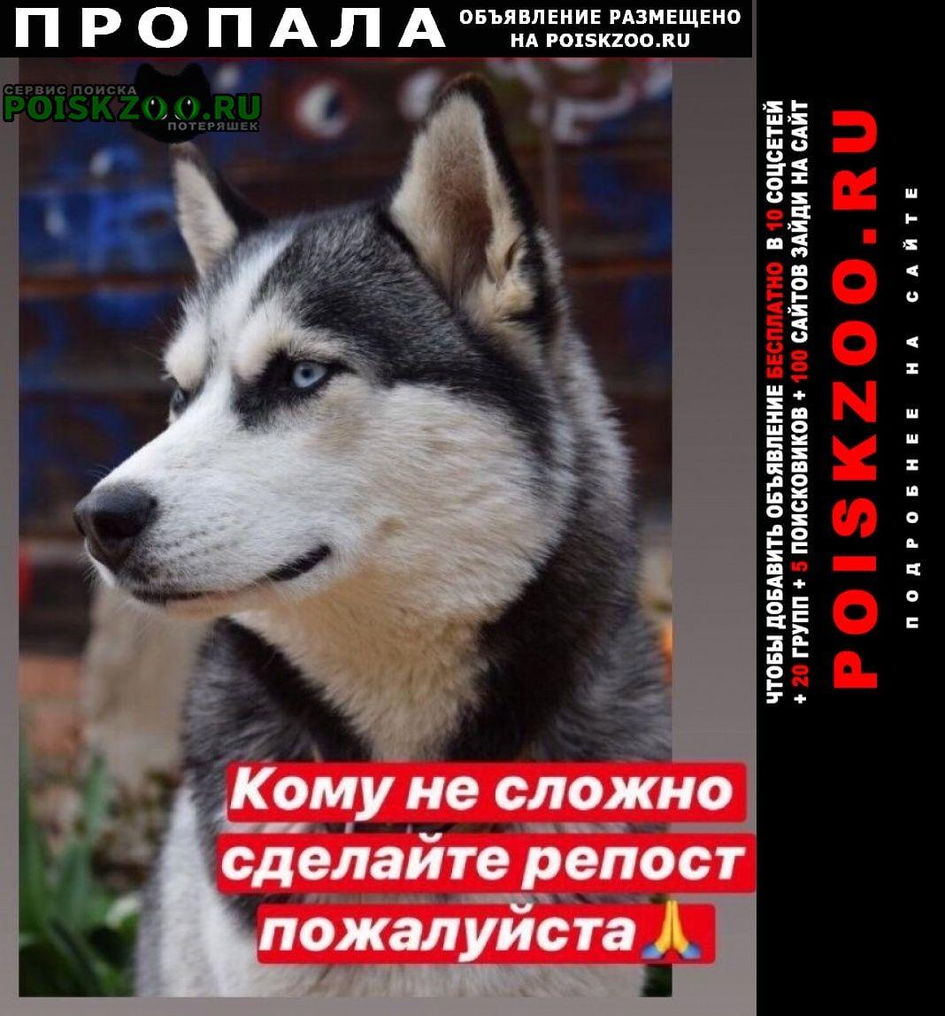 Пропала собака хаски Малоярославец