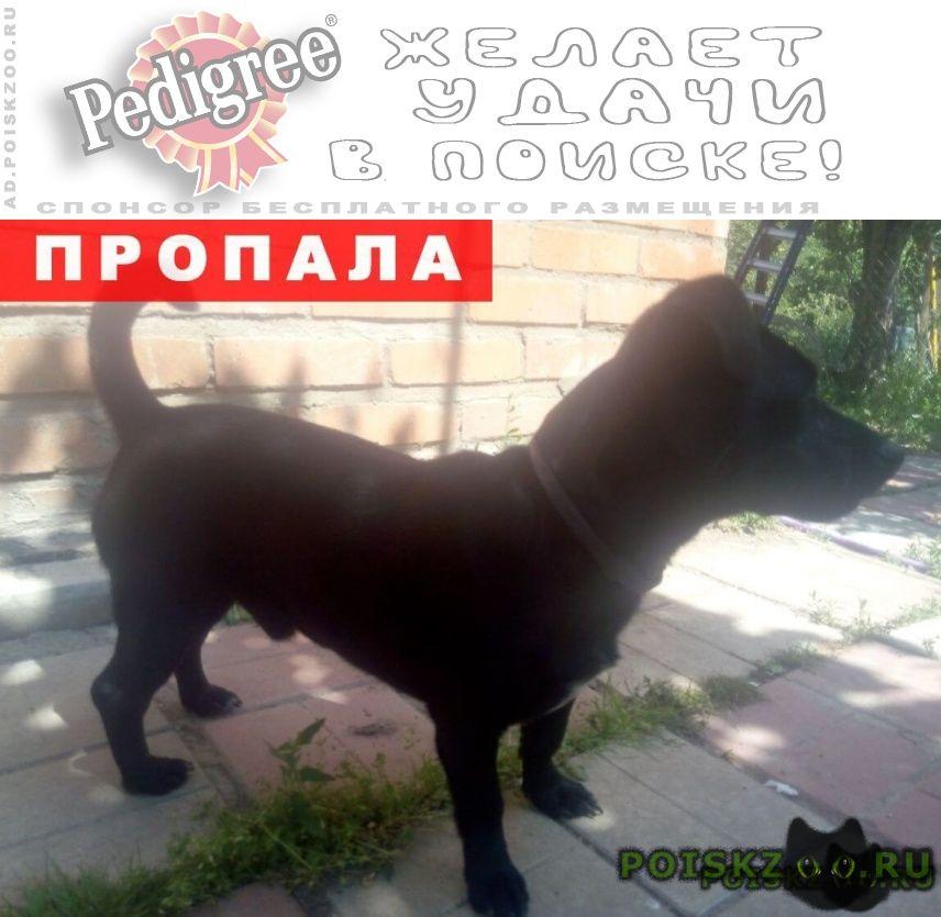 Пропала собака кобель потерялась г.Тула