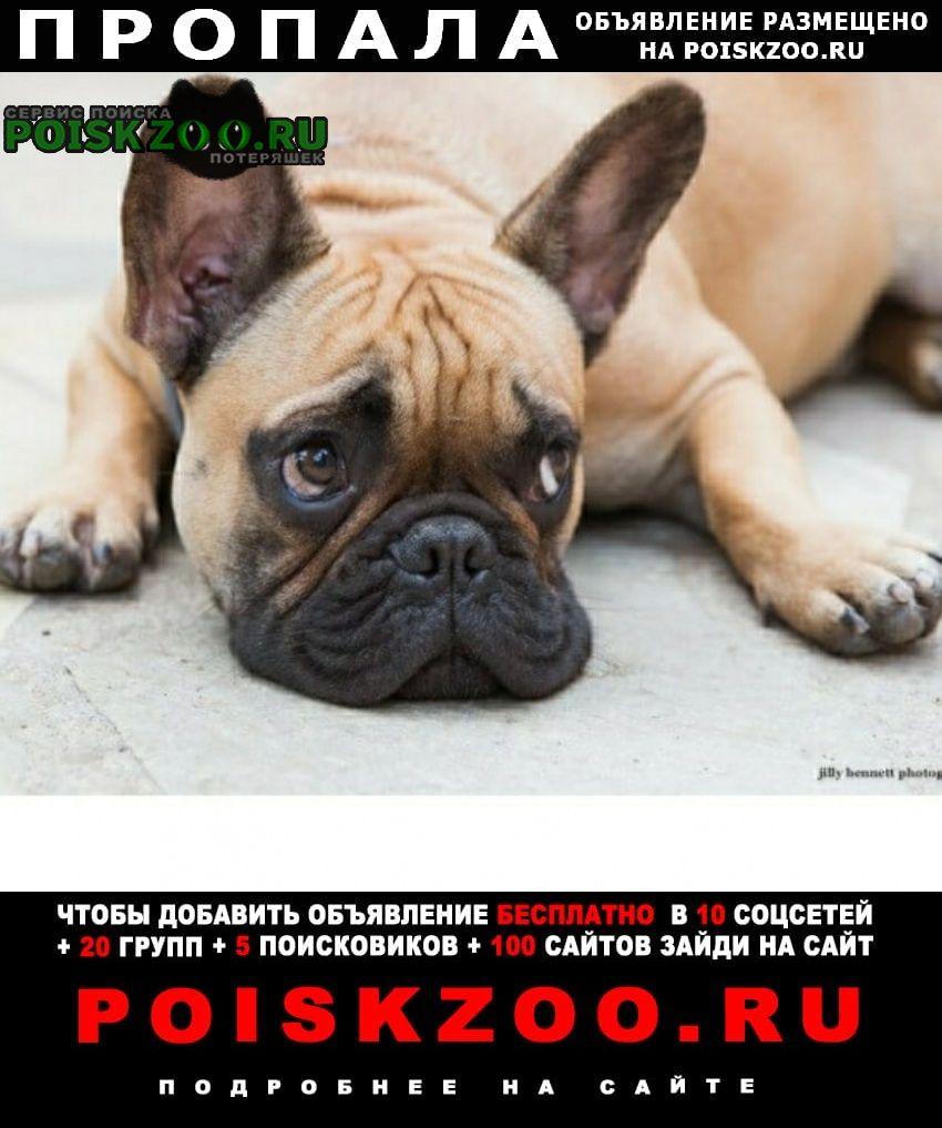 Пропала собака помогите пожалуйста Красный Сулин