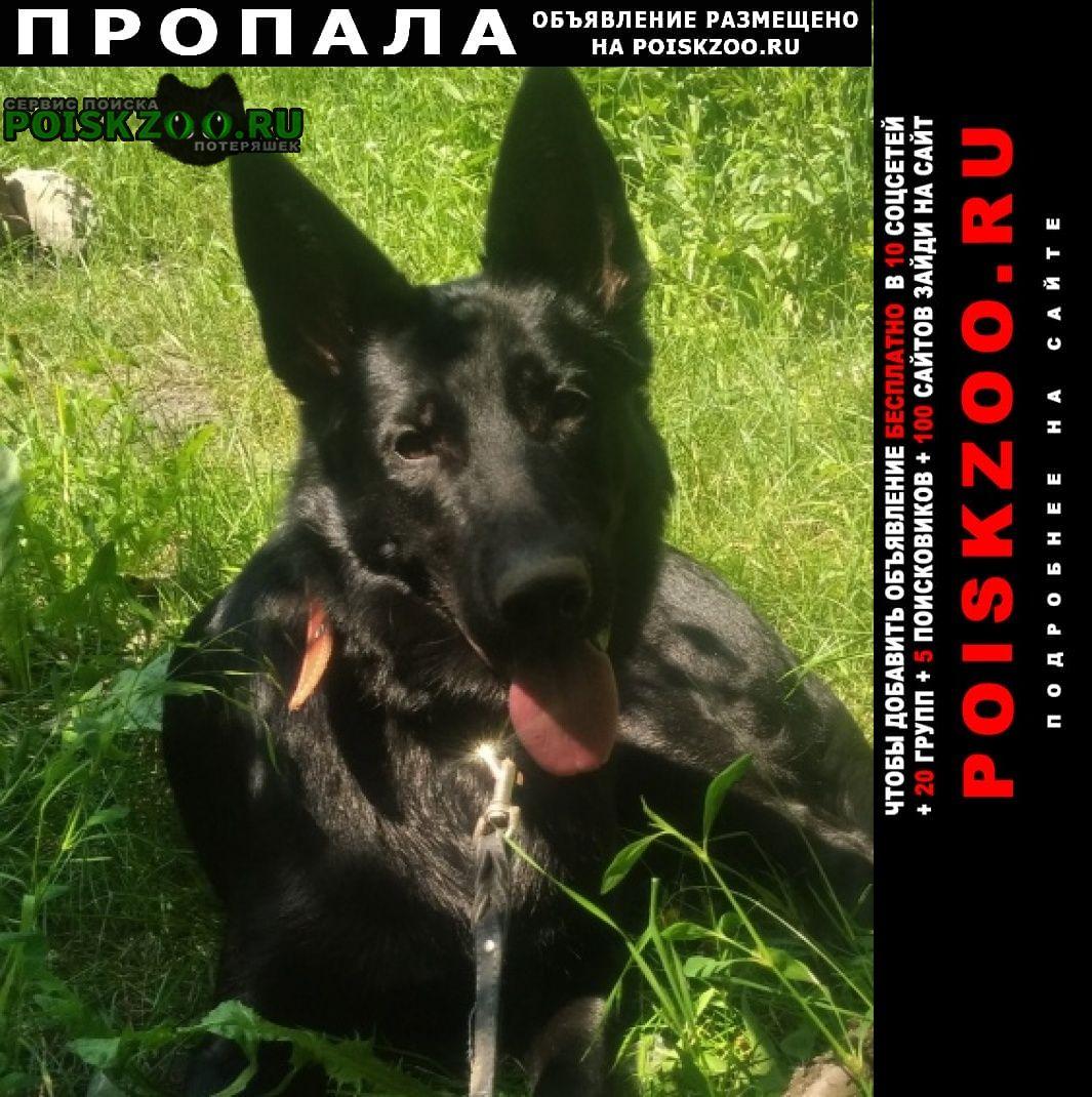 Пропала собака помогите найти собаку тел. Алчевск