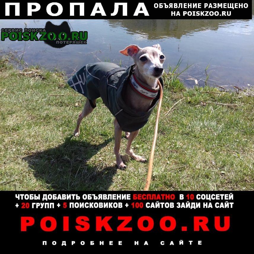 Пропала собака левретка джессика Санкт-Петербург