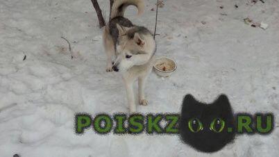 Пропала собака кобель г.Нарофоминск