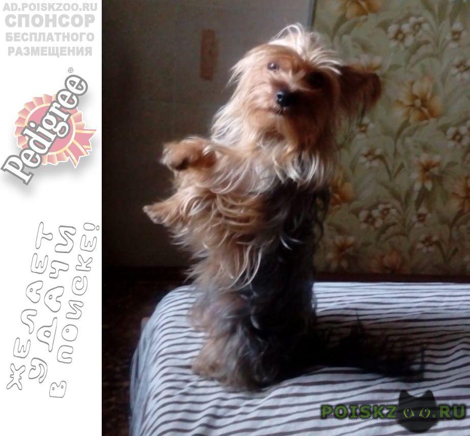 Пропала собака помогитевернуть домой. г.Екатеринбург