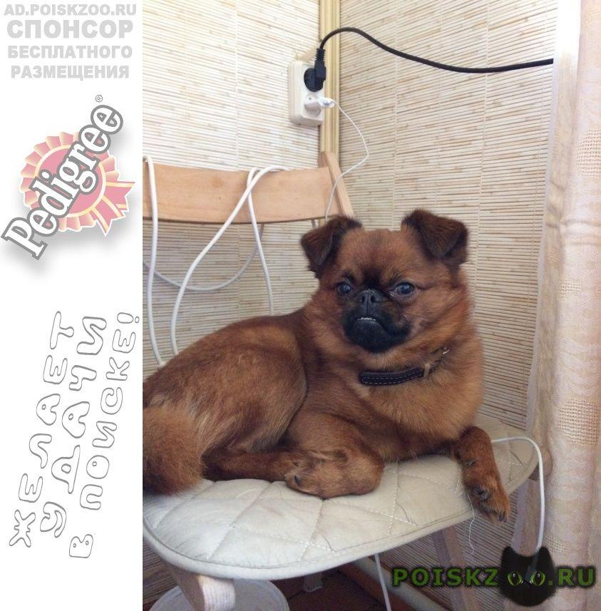 Пропала собака кобель рыжий пёсик. фролищенские озера г.Нижний Новгород