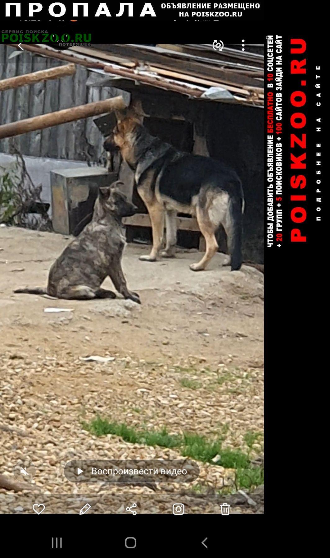 Пропала собака в селе орудьево Дмитров