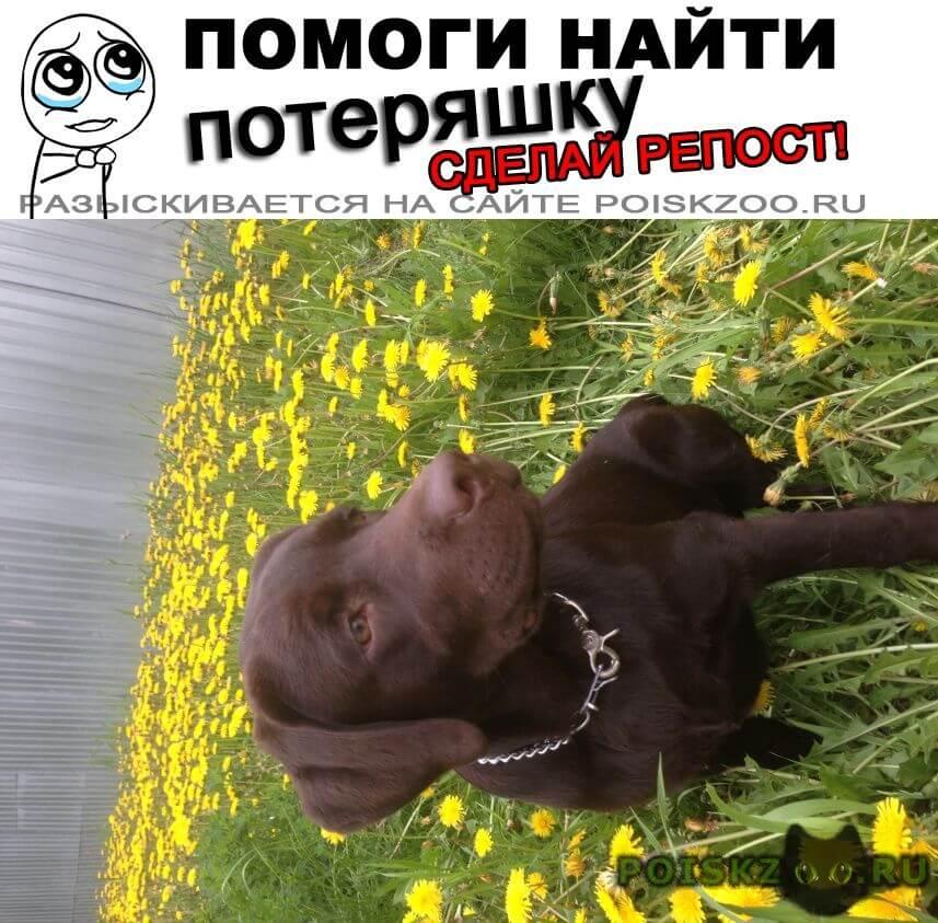 Пропала собака г.Ангарск