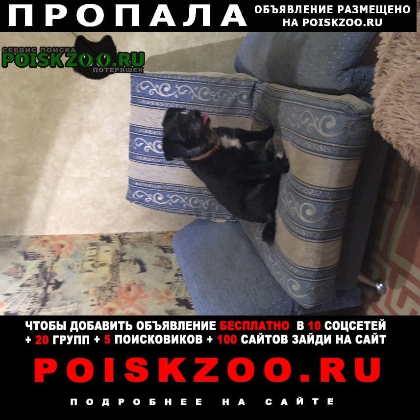 Мурманск Пропала собака