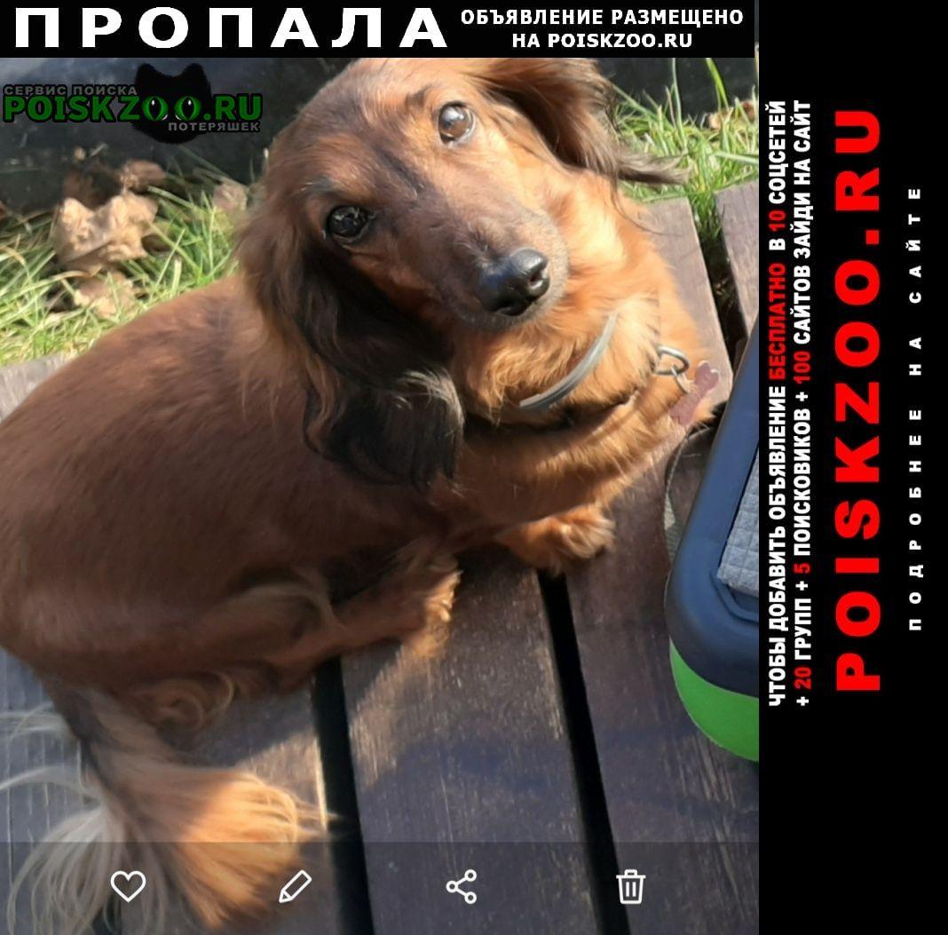 Пропала собака наша варенька Москва