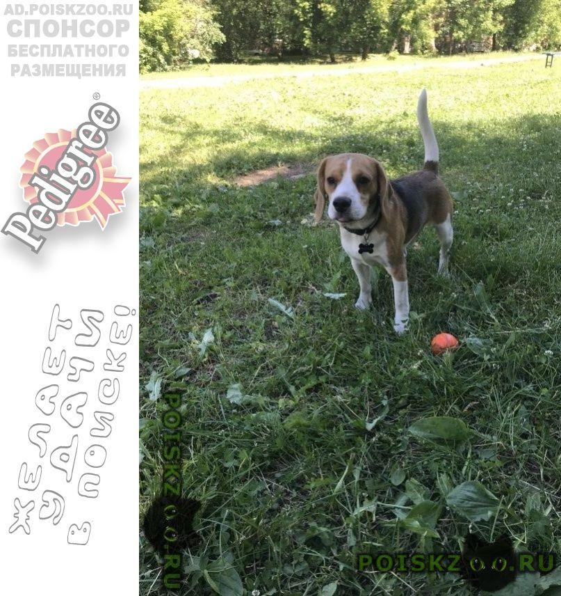 Пропала собака кобель г.Домодедово