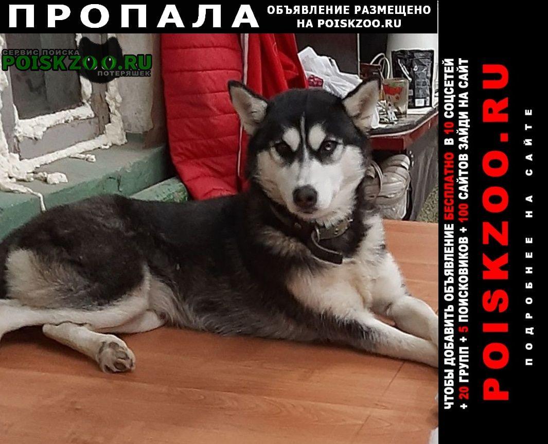 Пропала собака хаски черно - белая Пенза