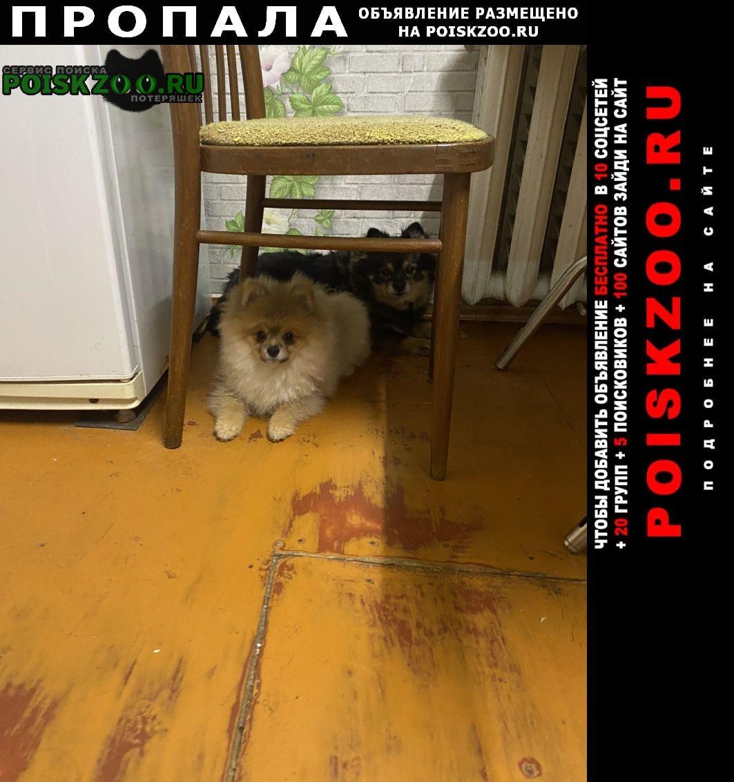 Пропала собака помогите найти собаку Витебск