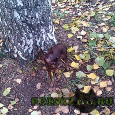 Пропала собака г.Екатеринбург