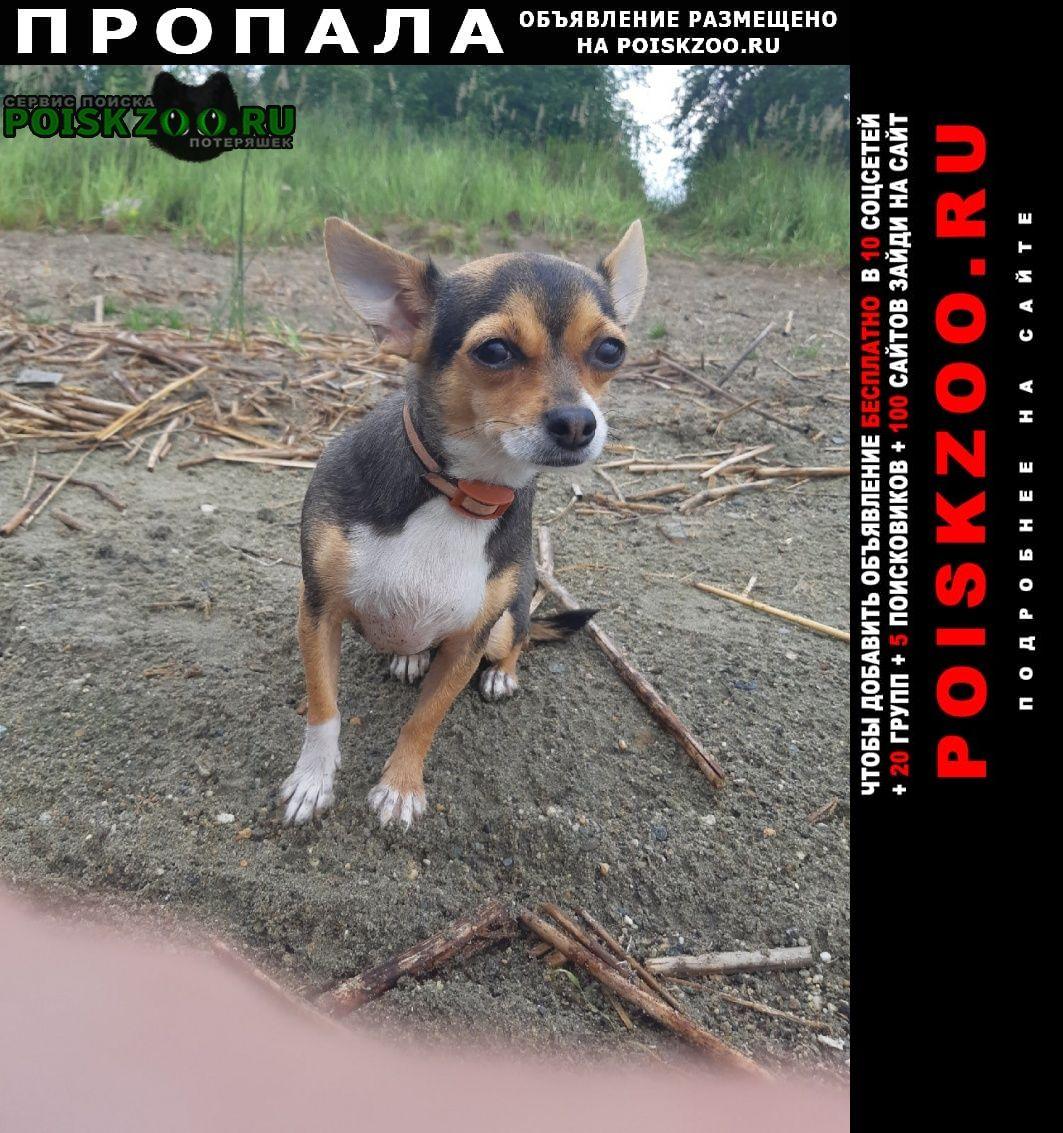 Пропала собака не теряем надежды срочно Челябинск