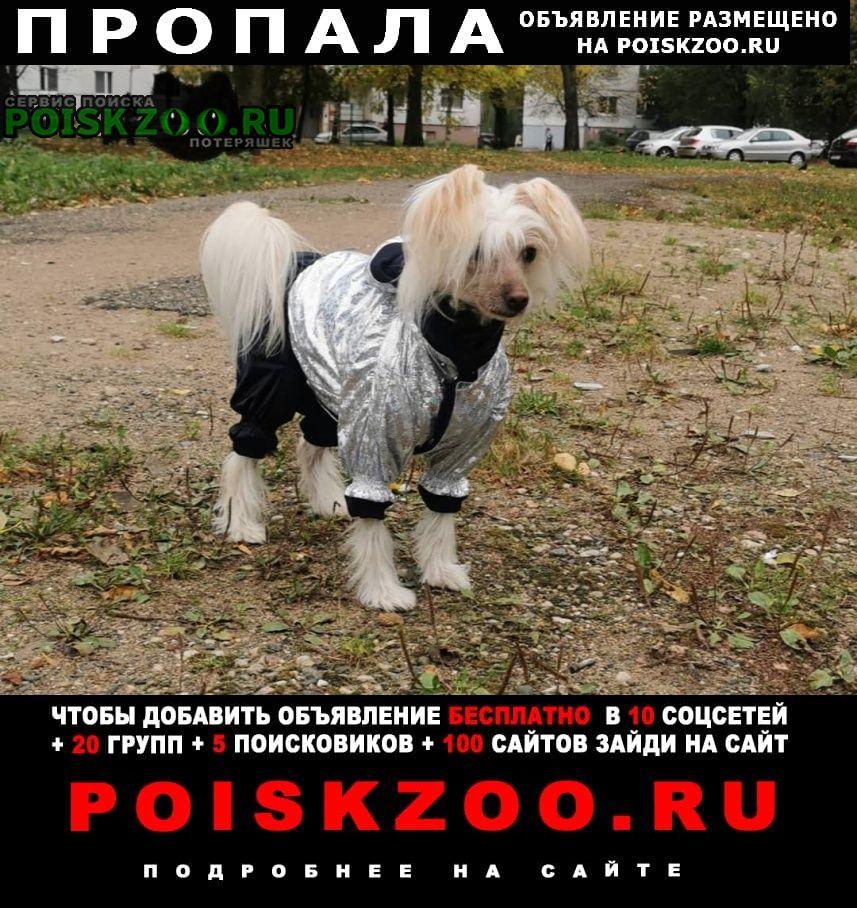 Витебск Пропала собака