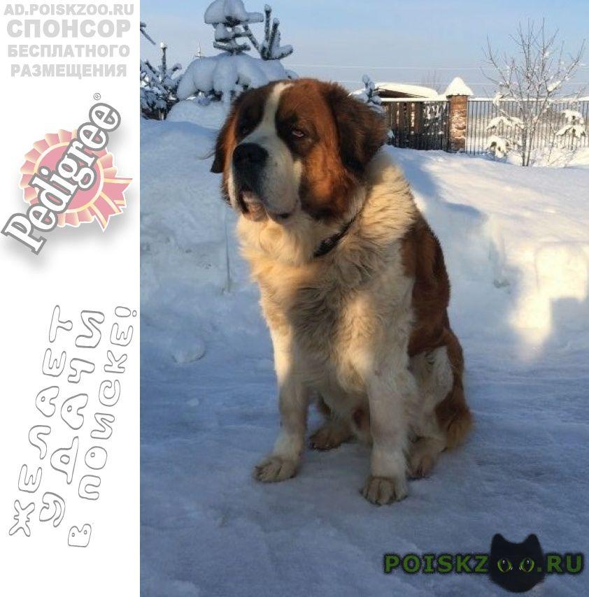 Пропала собака кобель срочно г.Орехово-Зуево