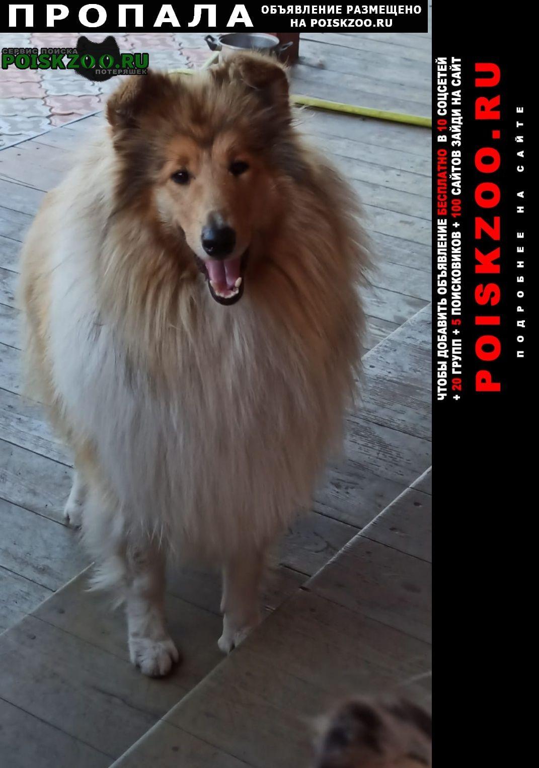 Пропала собака помогите Екатеринбург