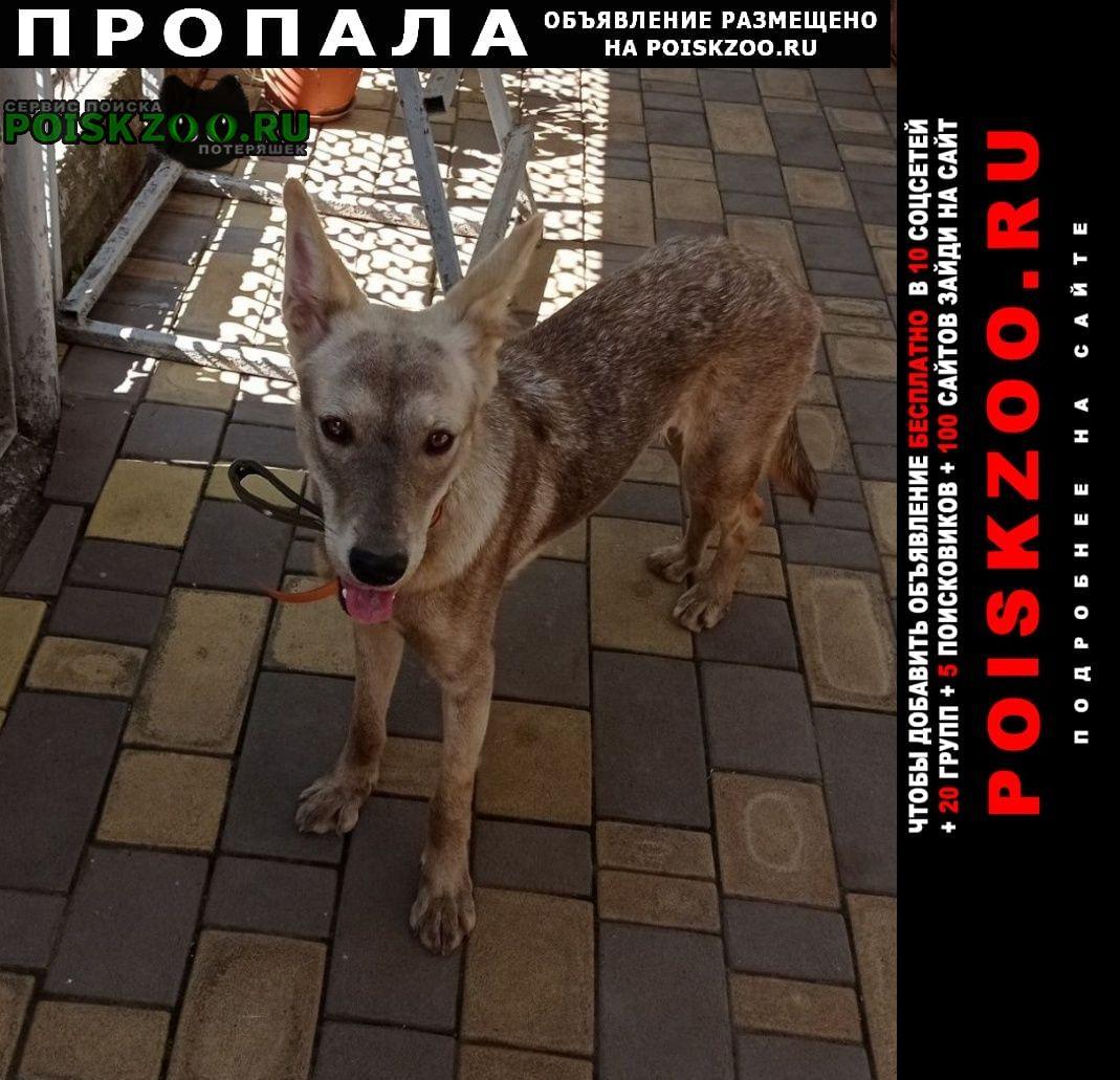 Пропала собака помогите найти Краснодар