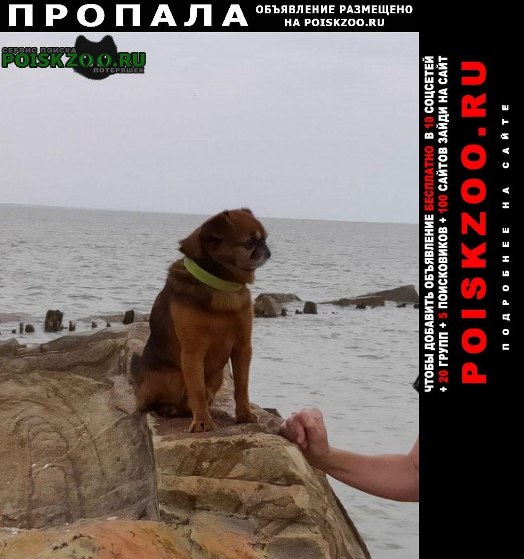 Пропала собака кобель по кличке, рики, Ахтырский