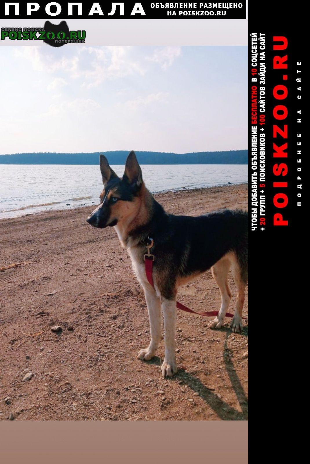 Пропала собака район виз Екатеринбург