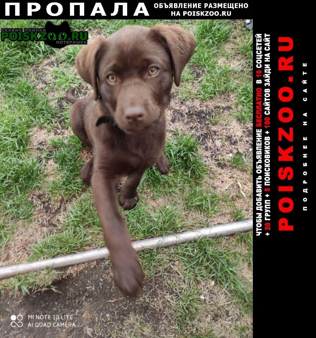 Пропала собака Белорецк
