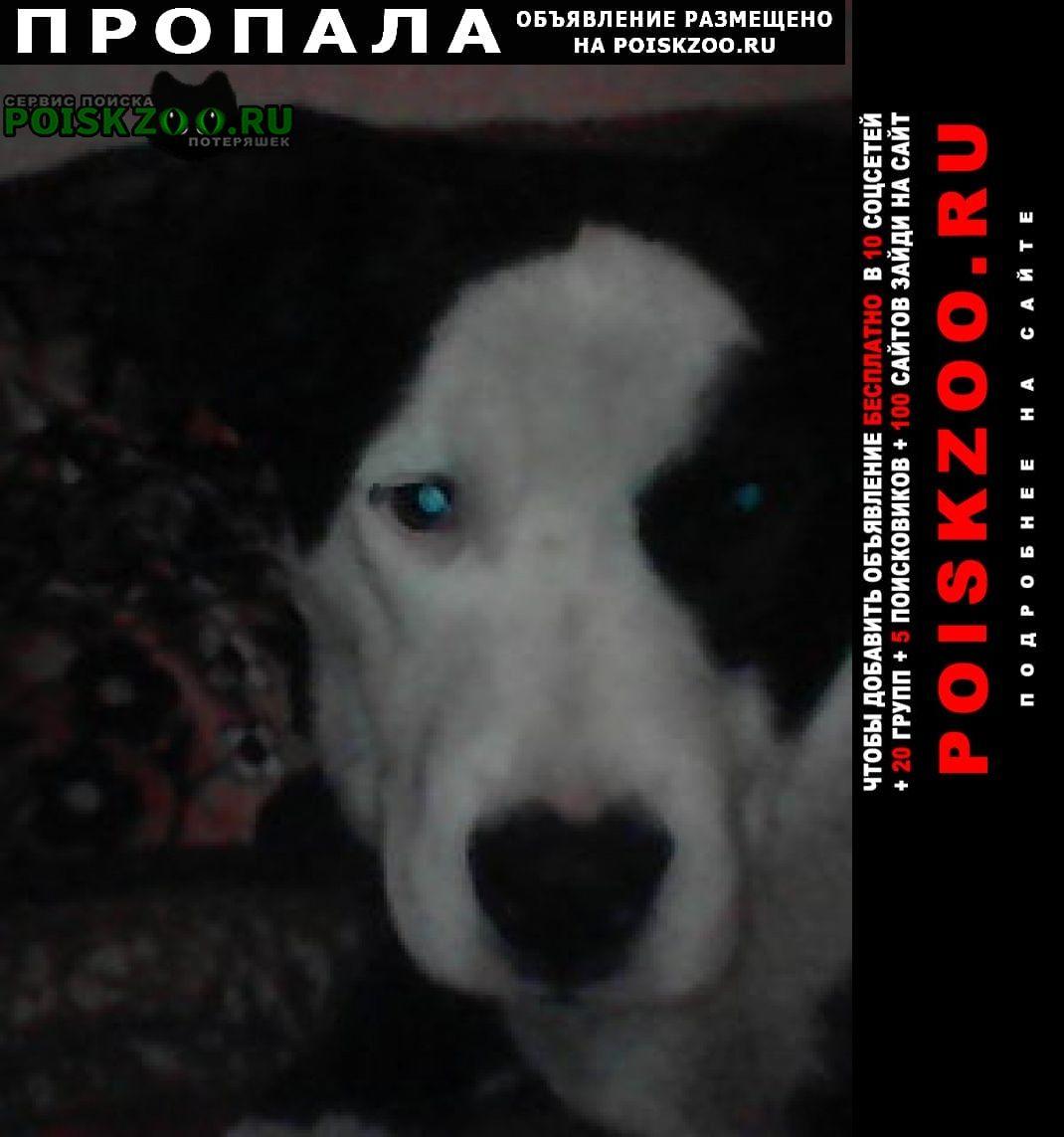 Пропала собака кобель неделю назад собака, зовут бим Макеевка