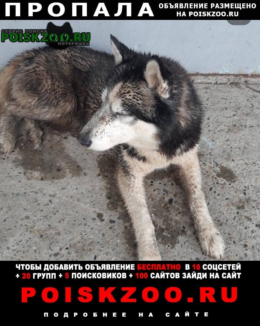 Краснодар Пропала собака кобель
