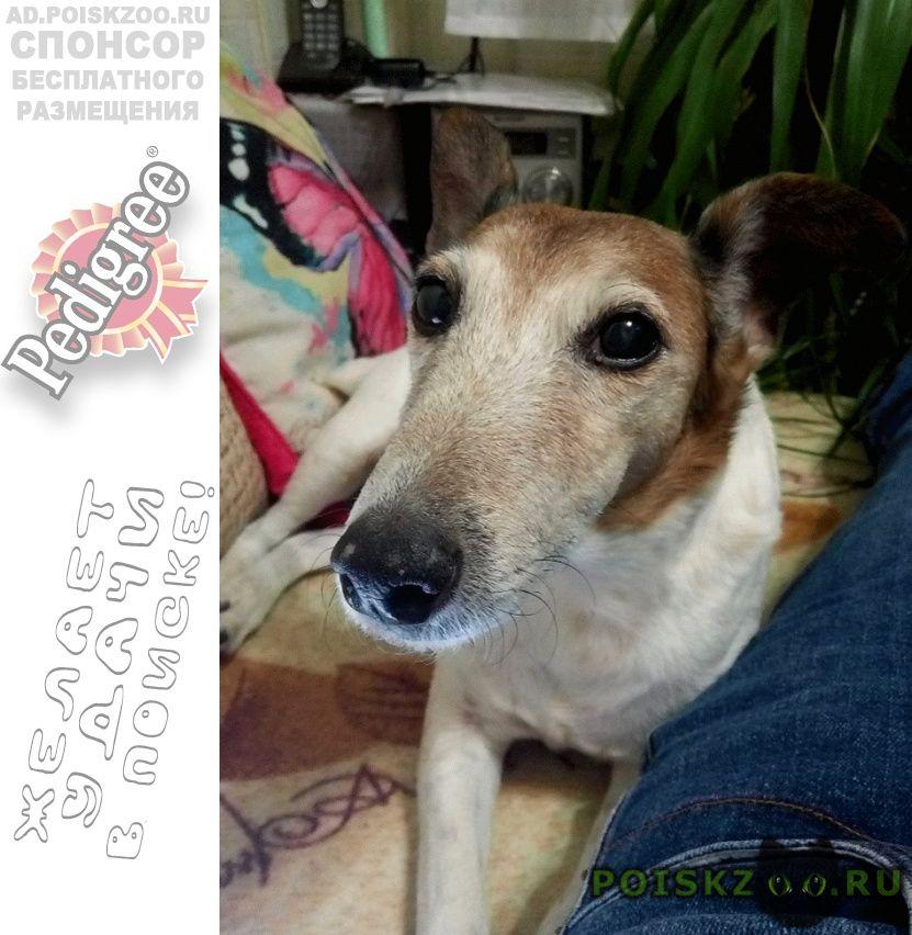 Пропала собака, район отрадное г.Москва