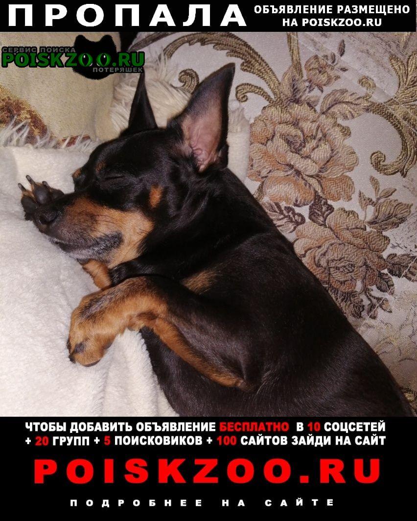 Пропала собака кобель Курск