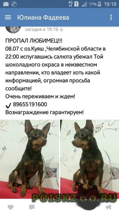 Пропала собака кобель тойчик тимофей г.Челябинск