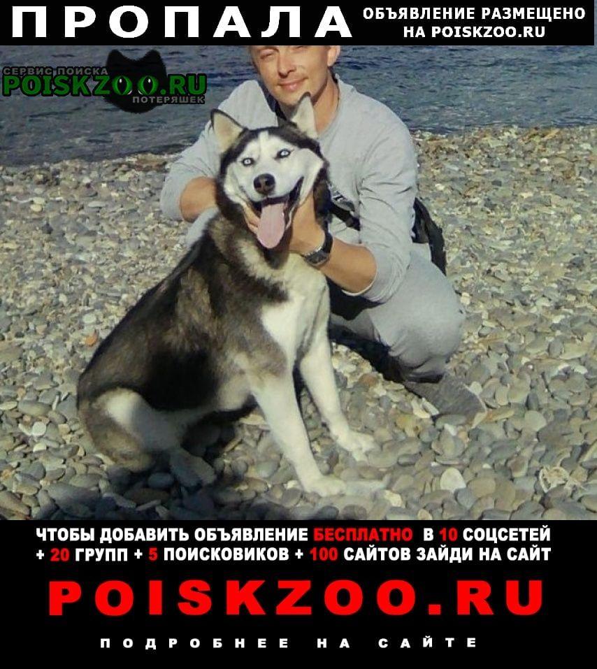 Пропала собака кобель Новороссийск