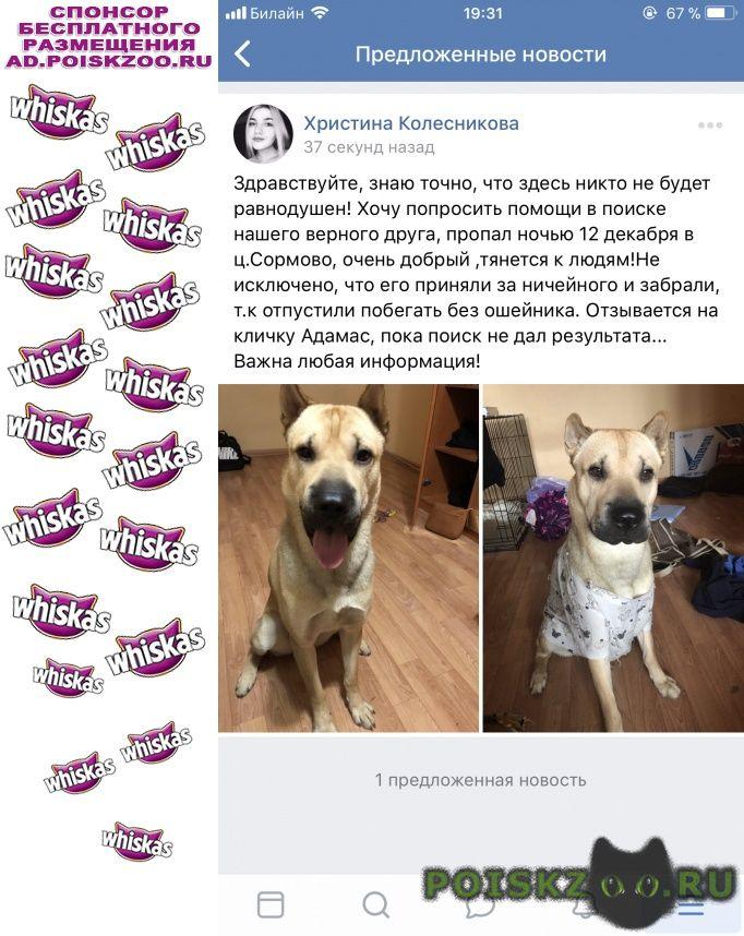 Пропала собака кобель г.Нижний Новгород
