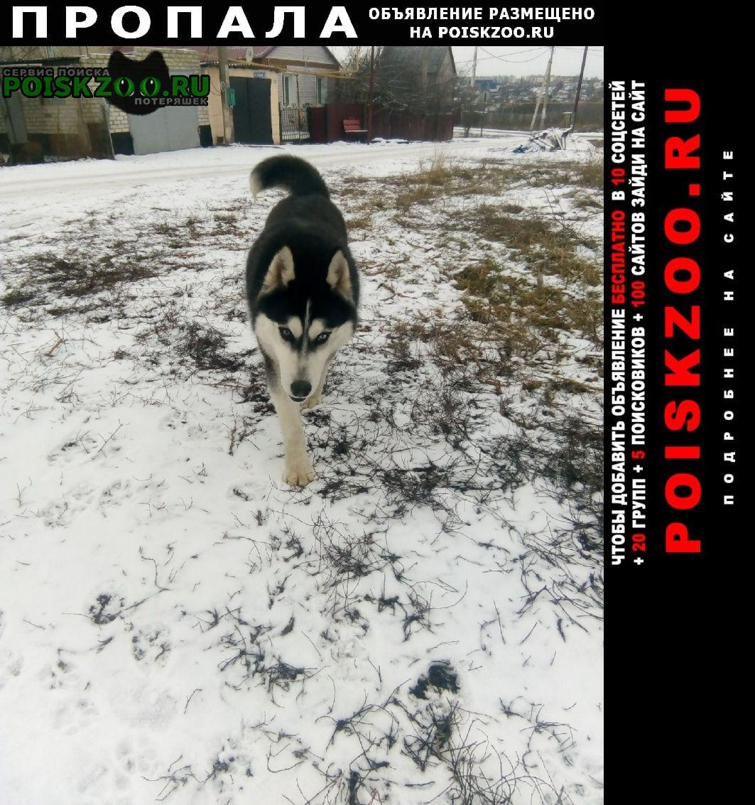 Пропала собака Губкин