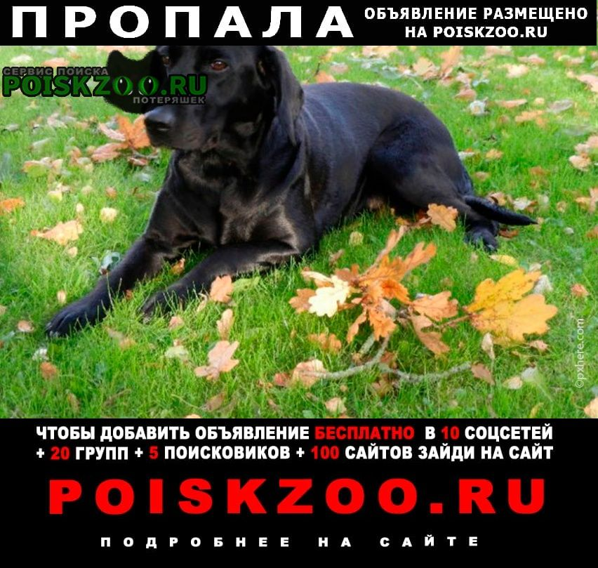 Екатеринбург Пропала собака кобель. зовут оскар.
