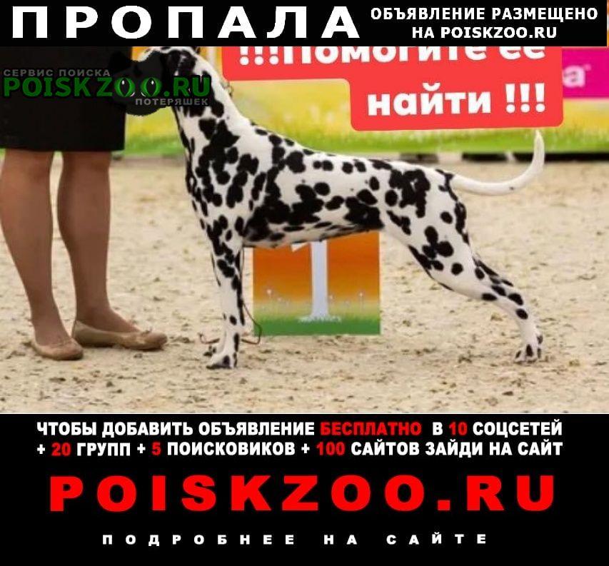 Пропала собака далматин Москва