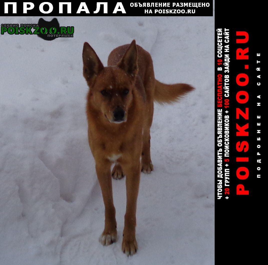 Нижний Новгород Пропала собака кобель