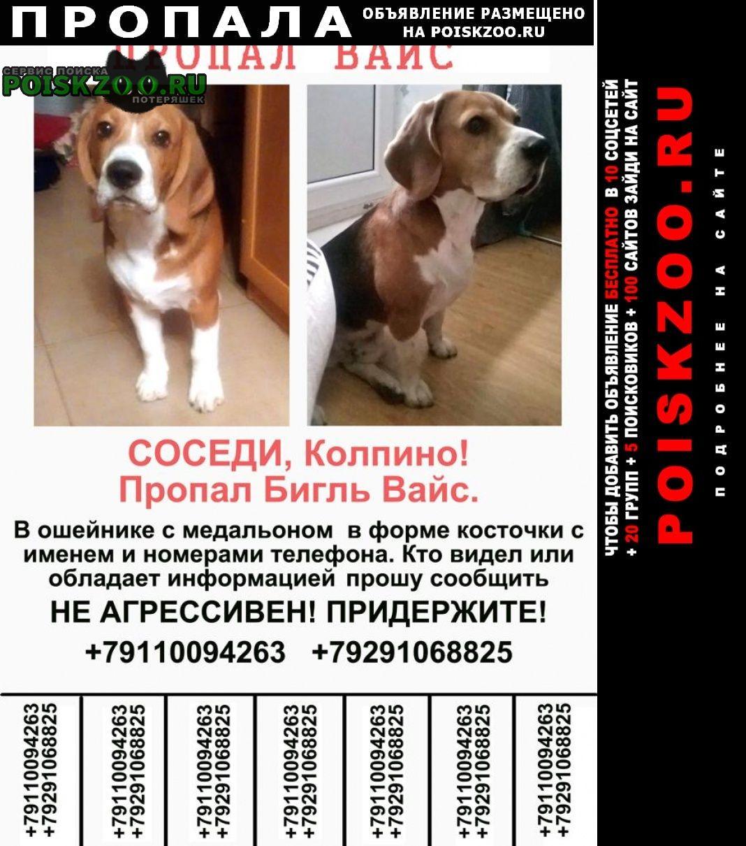 Пропала собака кобель Колпино