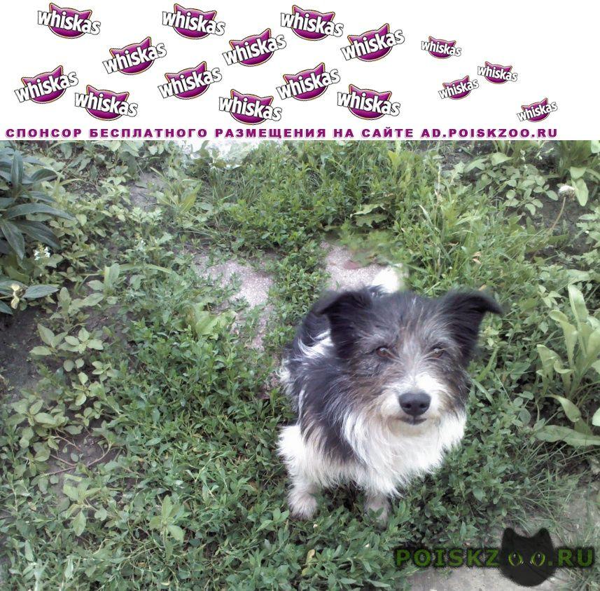 Пропала собака кобель г.Тамбов