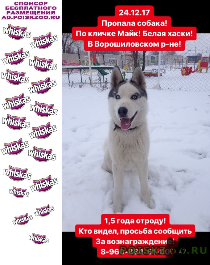 Пропала собака пропада хаски г.Волгоград