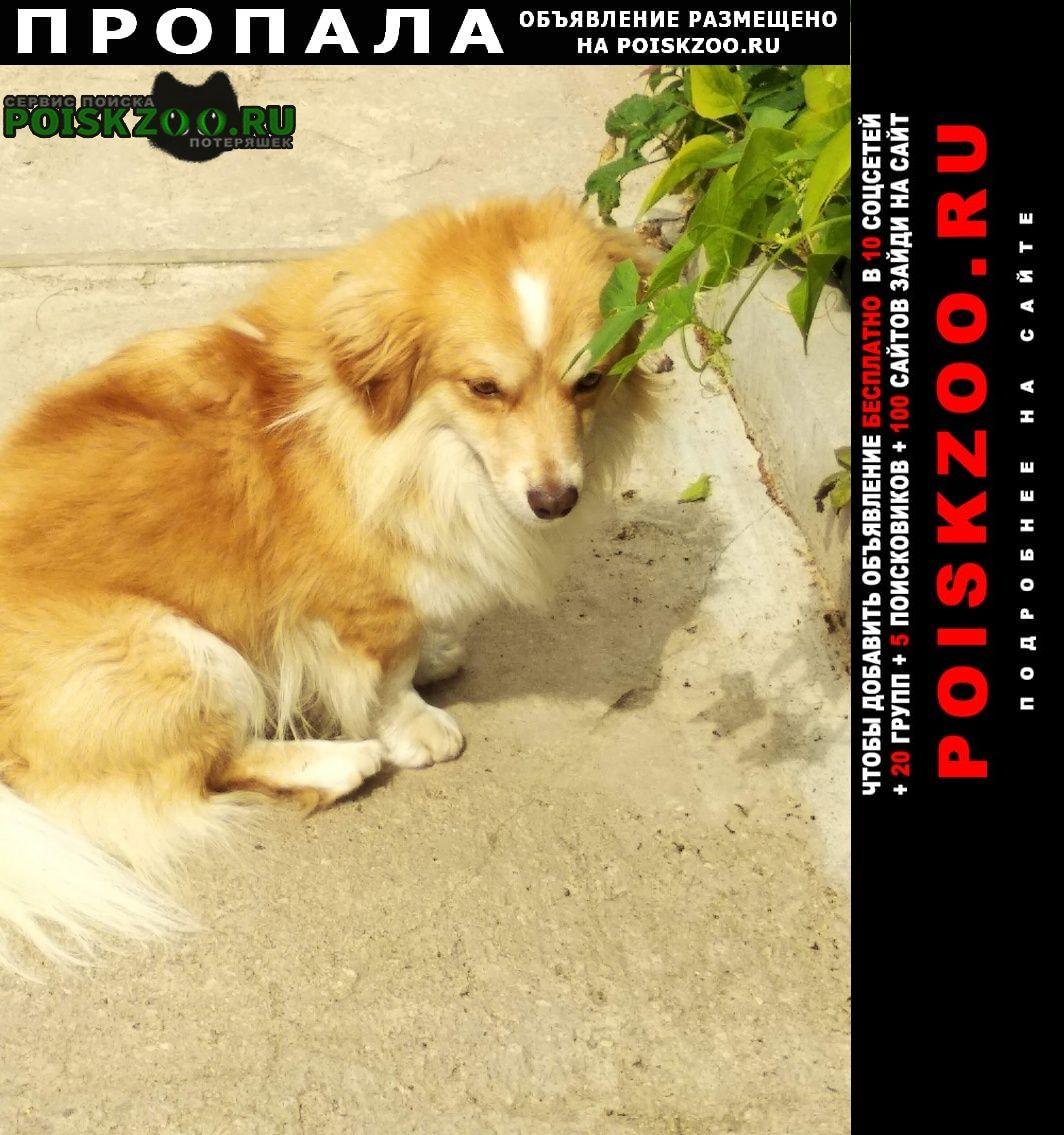 Пропала собака Смоленск