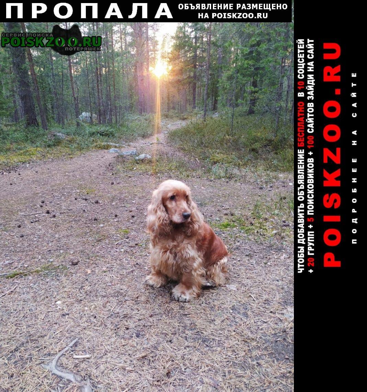 Пропала собака Приозерск