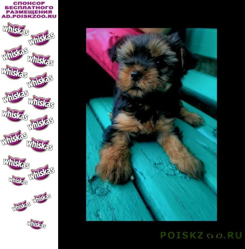 Пропала собака щенок г.Луганск