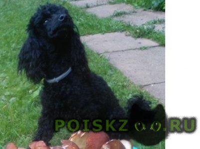 Пропала собака кобель помогите вернуть друга г.Москва