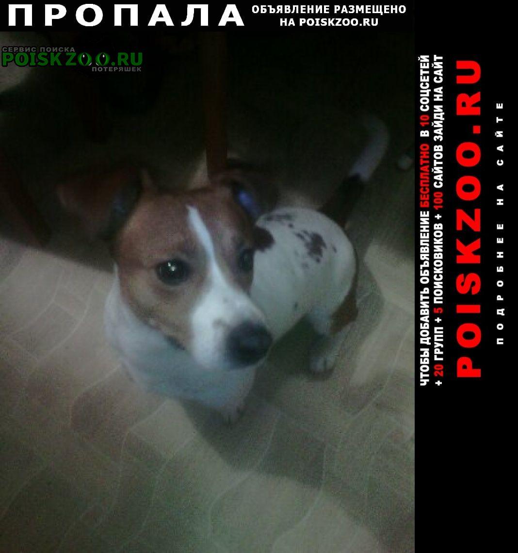 Пропала собака кобель помогите найти район струги красные Струги-Красные