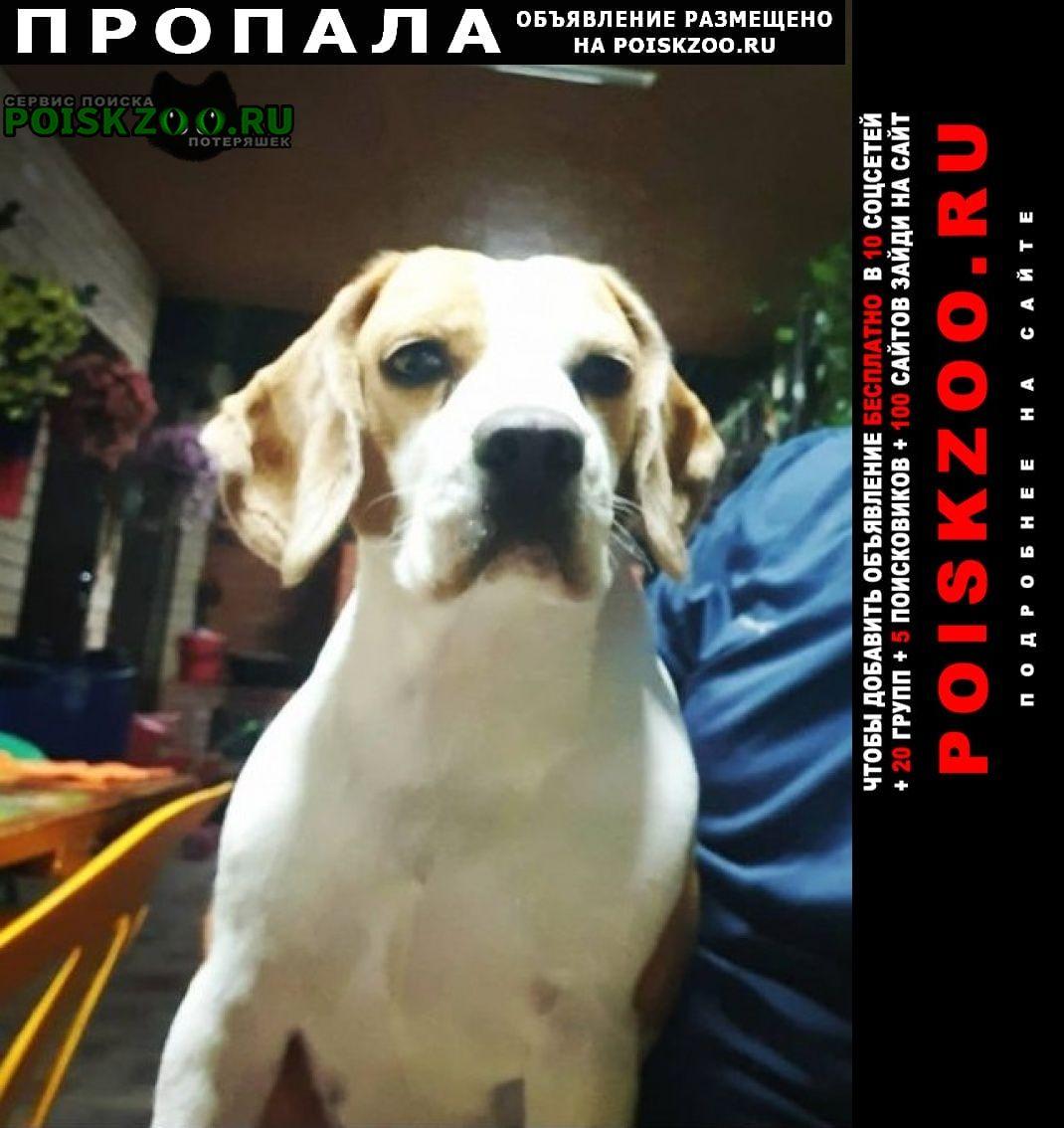 Пропала собака прошу вернуть за вознаграждение Невинномысск
