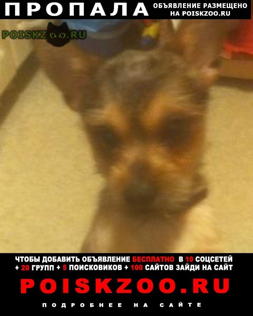 Пропала собака кобель срочно  Видное
